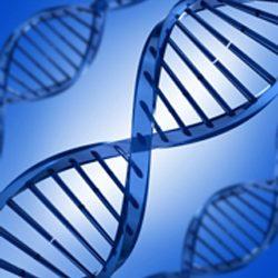 Postmortem DNA Testing