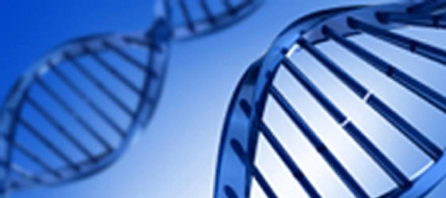 DNA_Model_900